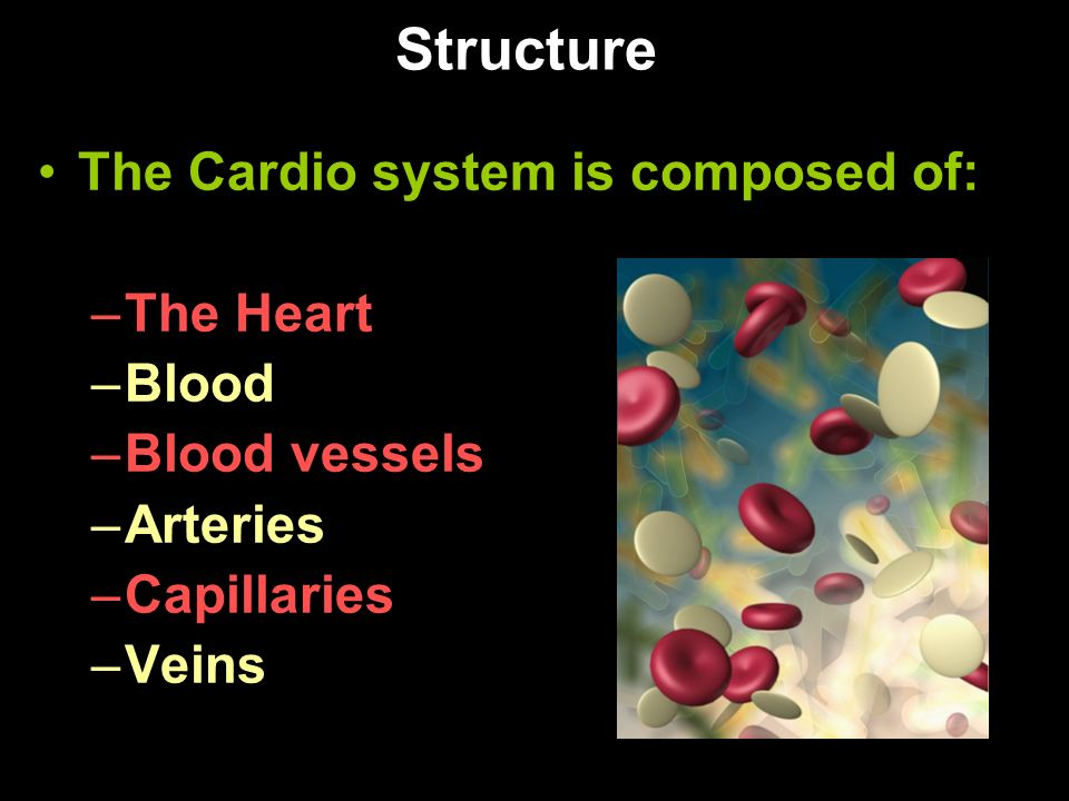 Structure The Cardio system is composed of: –The Heart –Blood –Blood vessels –Arteries –Capillaries –Veins