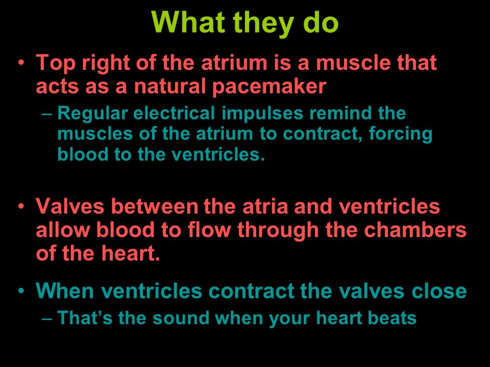 What they do Top right of the atrium is a muscle that acts as a natural pacemaker –Regular electrical impulses remind the muscles of the atrium to con