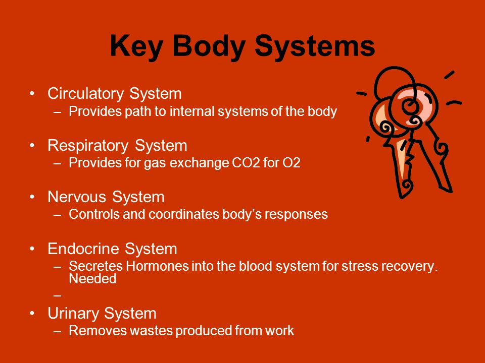 Key Body Systems Circulatory System –Provides path to internal systems of the body Respiratory System –Provides for gas exchange CO2 for O2 Nervous Sy