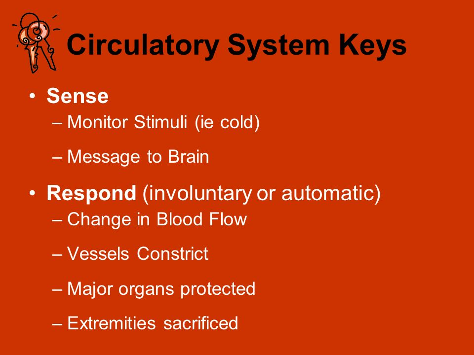 Circulatory System Keys Sense –Monitor Stimuli (ie cold) –Message to Brain Respond (involuntary or automatic) –Change in Blood Flow –Vessels Constrict –Major organs protected –Extremities sacrificed