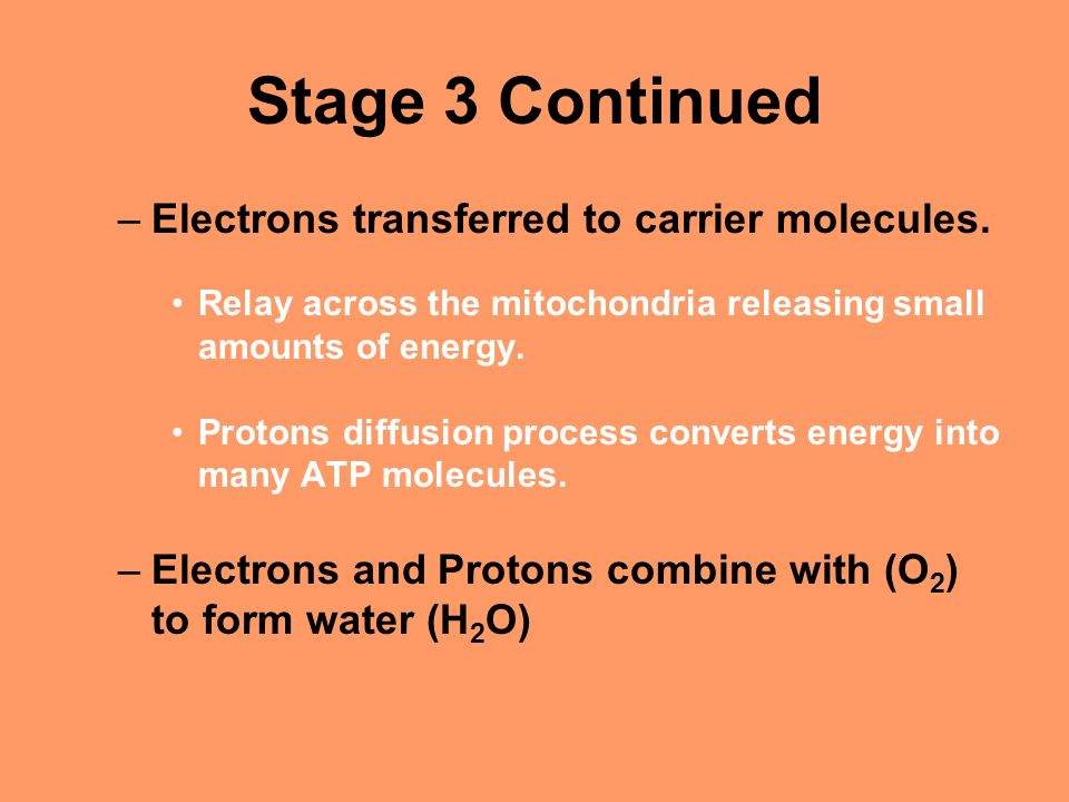 Stage 3 Continued –Electrons transferred to carrier molecules.