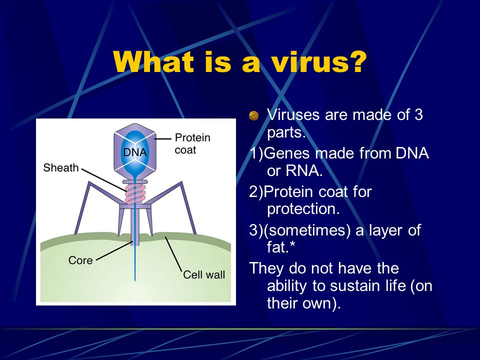 What is a virus? Viruses are made of 3 parts. 1)Genes made from DNA or RNA. 2)Protein coat for protection. 3)(sometimes) a layer of fat.* They do not