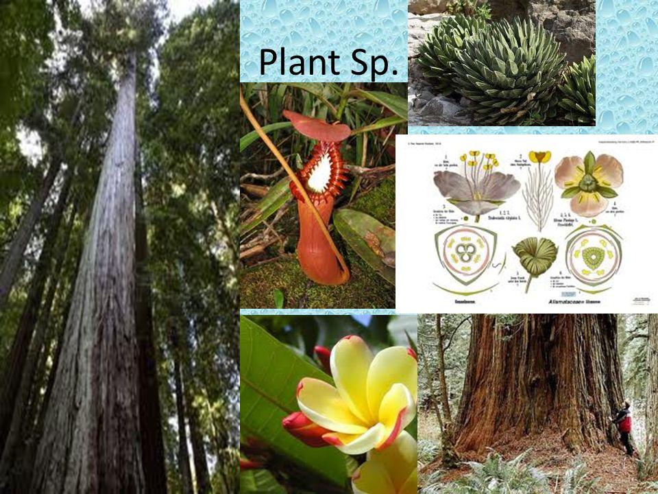 Plant Sp.