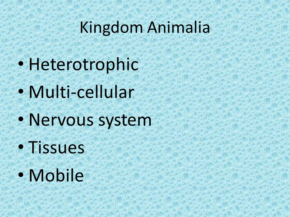 Kingdom Animalia Heterotrophic Multi-cellular Nervous system Tissues Mobile