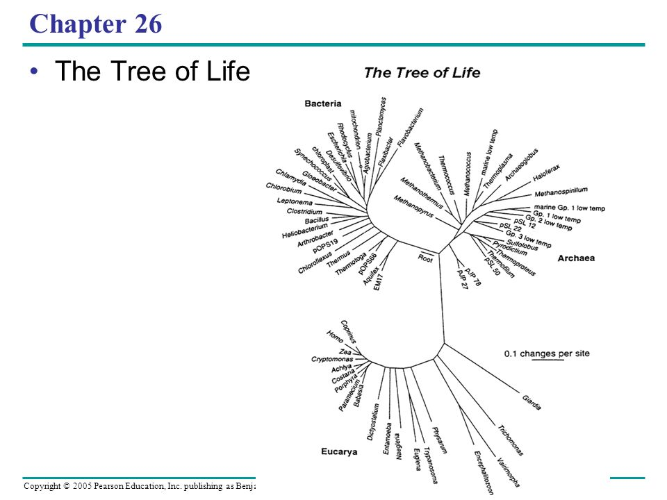 Copyright © 2005 Pearson Education, Inc. publishing as Benjamin Cummings Chapter 26 The Tree of Life
