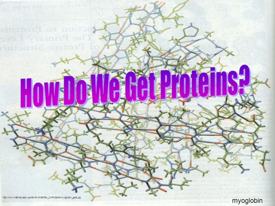 http://www.math.fsu.edu/~quine/IntroMathBio_04/Proteins/myoglobin_geis.jpg myoglobin