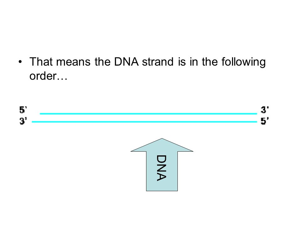 That means the DNA strand is in the following order… DNA