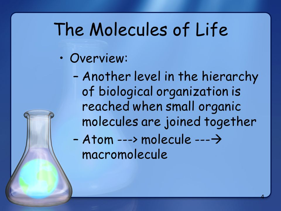 4 The Molecules of Life Overview: –Another level in the hierarchy of biological organization is reached when small organic molecules are joined togeth