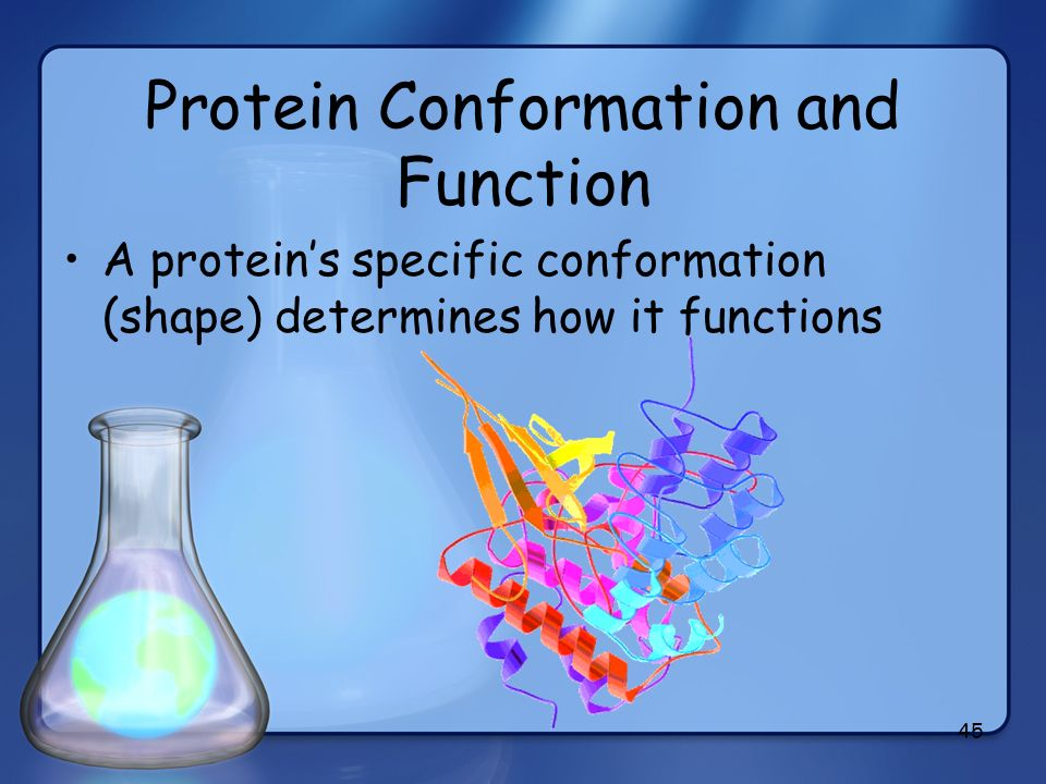 45 Protein Conformation and Function A proteins specific conformation (shape) determines how it functions