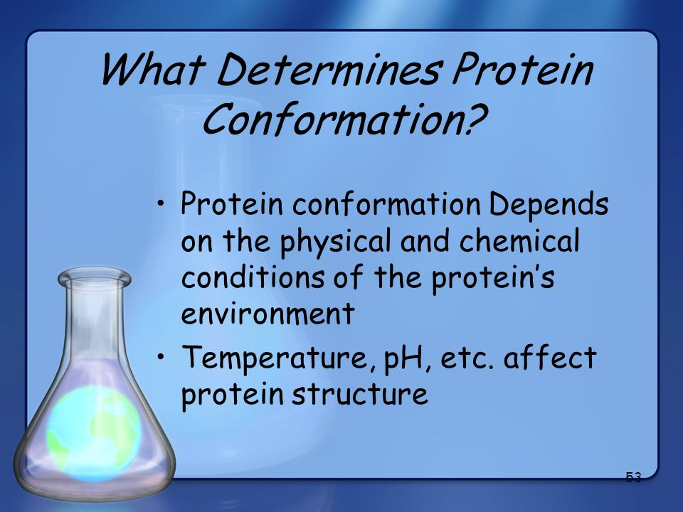 53 What Determines Protein Conformation? Protein conformation Depends on the physical and chemical conditions of the proteins environment Temperature,