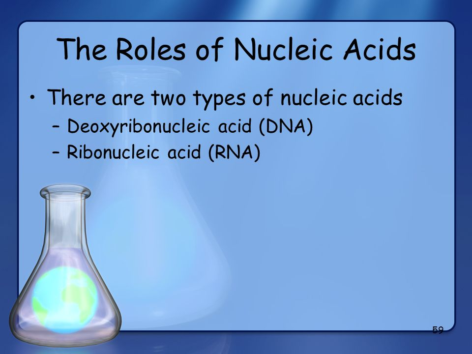 59 The Roles of Nucleic Acids There are two types of nucleic acids –Deoxyribonucleic acid (DNA) –Ribonucleic acid (RNA)