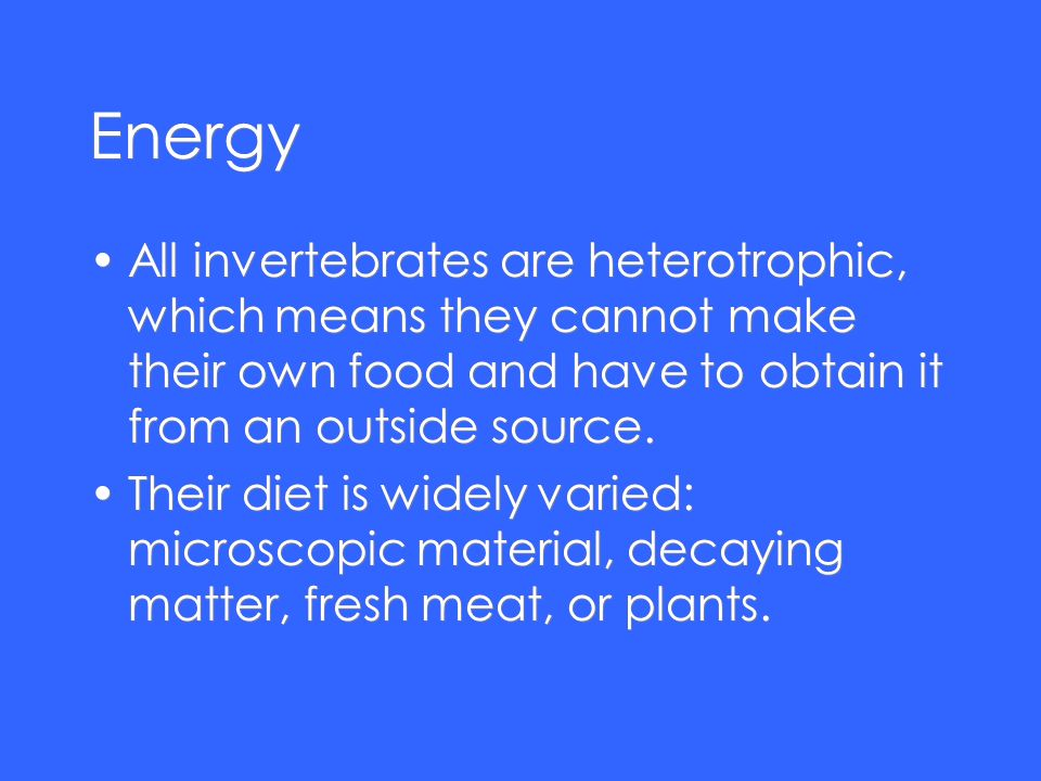 Energy All invertebrates are heterotrophic, which means they cannot make their own food and have to obtain it from an outside source. Their diet is wi