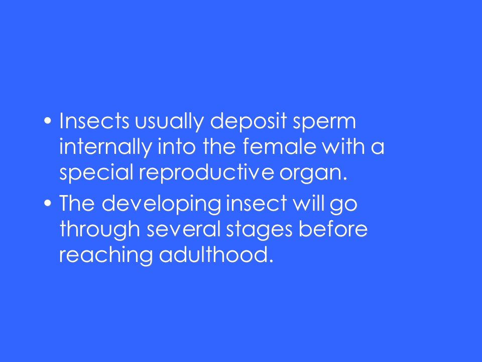 Insects usually deposit sperm internally into the female with a special reproductive organ. The developing insect will go through several stages befor
