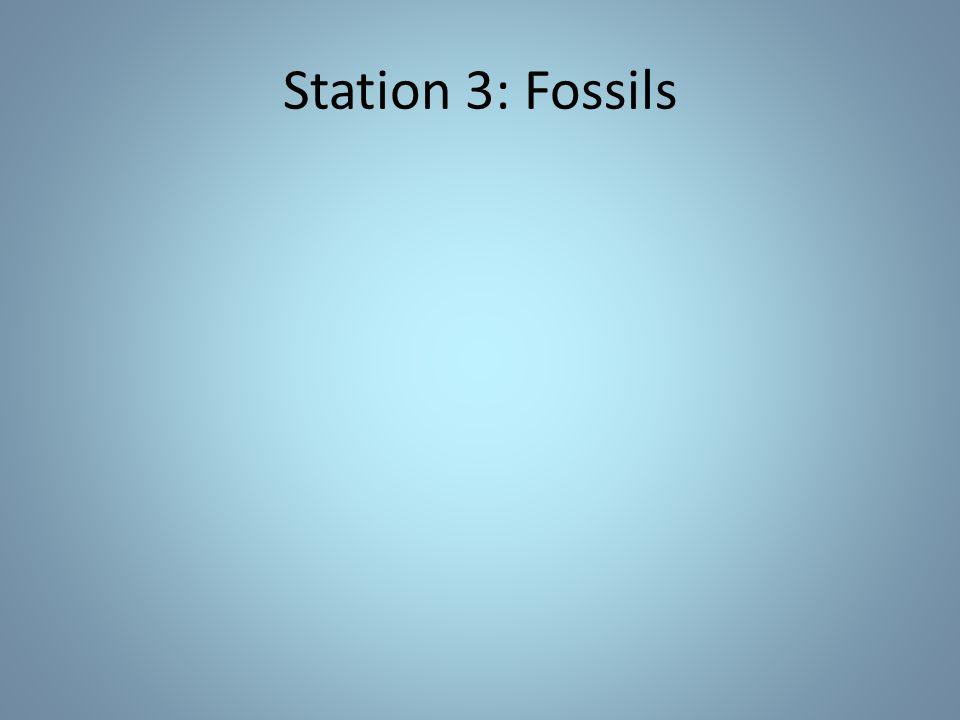 Station 3: Fossils