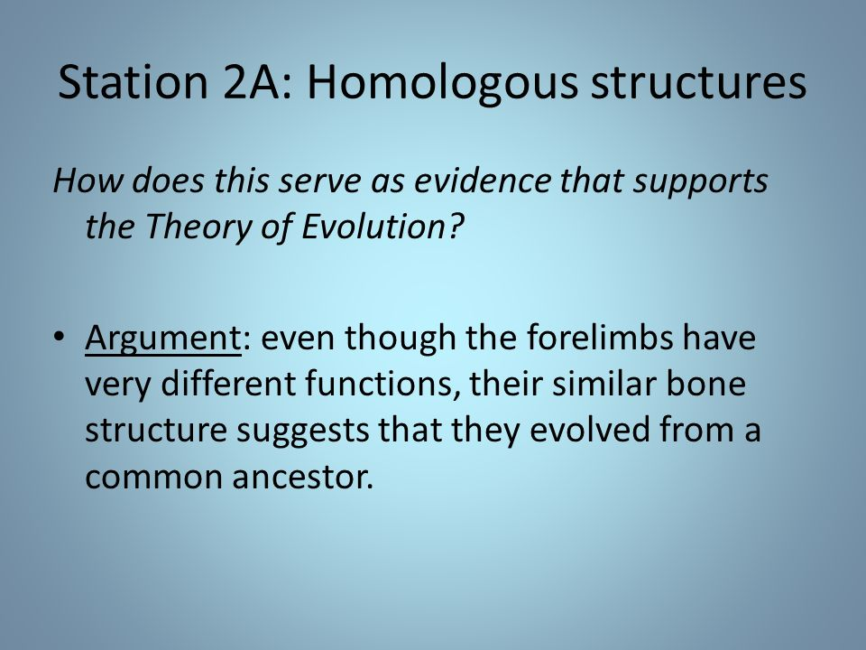 Station 2A: Homologous structures How does this serve as evidence that supports the Theory of Evolution? Argument: even though the forelimbs have very