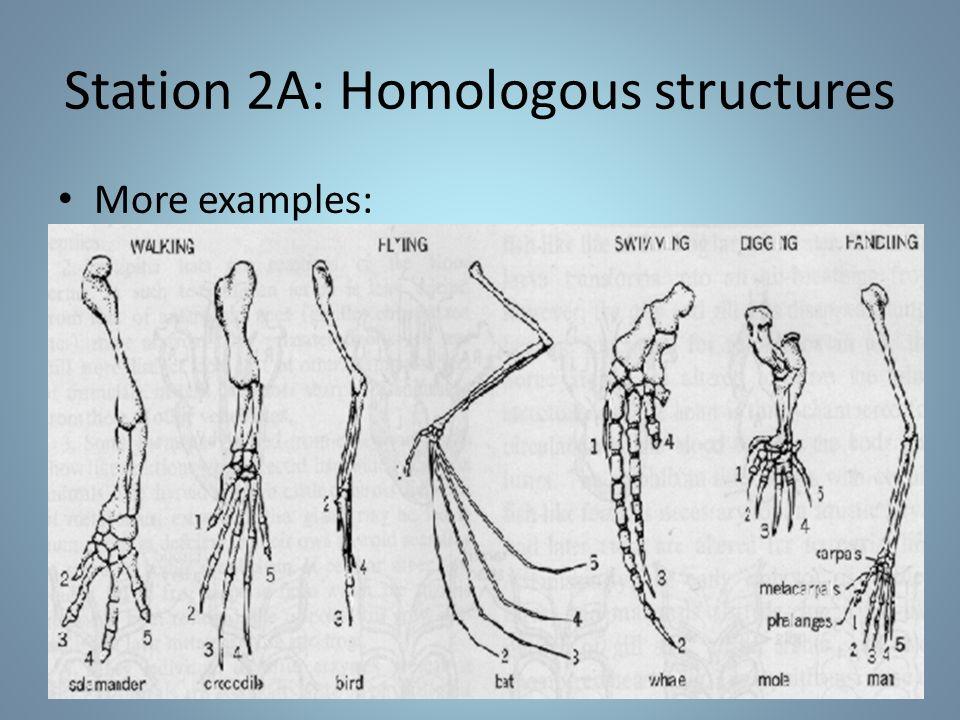 Station 2B: Vestigial structures