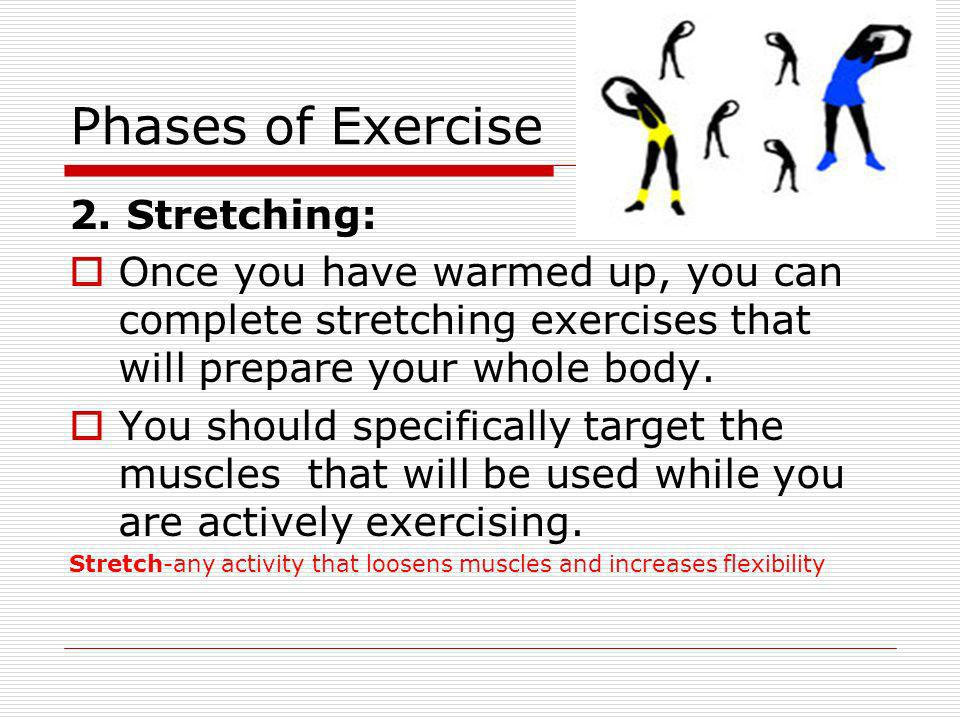 Phases of Exercise 2. Stretching: Once you have warmed up, you can complete stretching exercises that will prepare your whole body. You should specifi