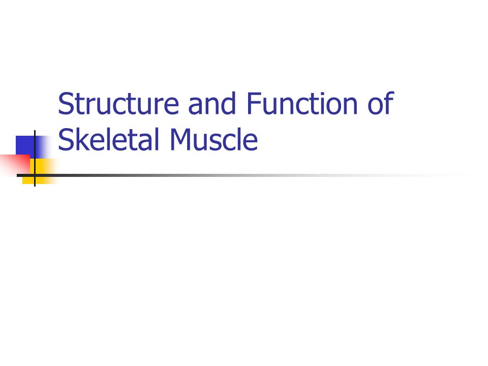 Skeletal Muscle Human body contains over 400 skeletal muscles 40-50% of total body weight Functions of skeletal muscle Force production for locomotion and breathing Force production for postural support Heat production during cold stress