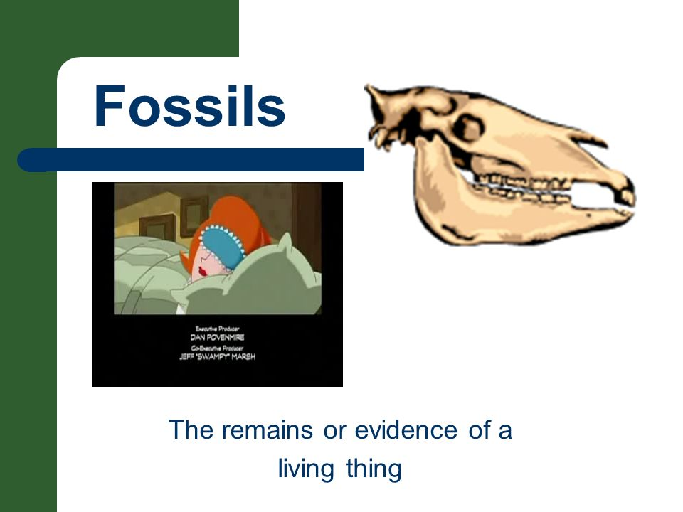 Fossils The remains or evidence of a living thing