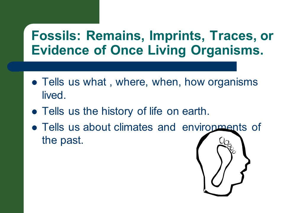 Fossils: Remains, Imprints, Traces, or Evidence of Once Living Organisms. Tells us what, where, when, how organisms lived. Tells us the history of lif