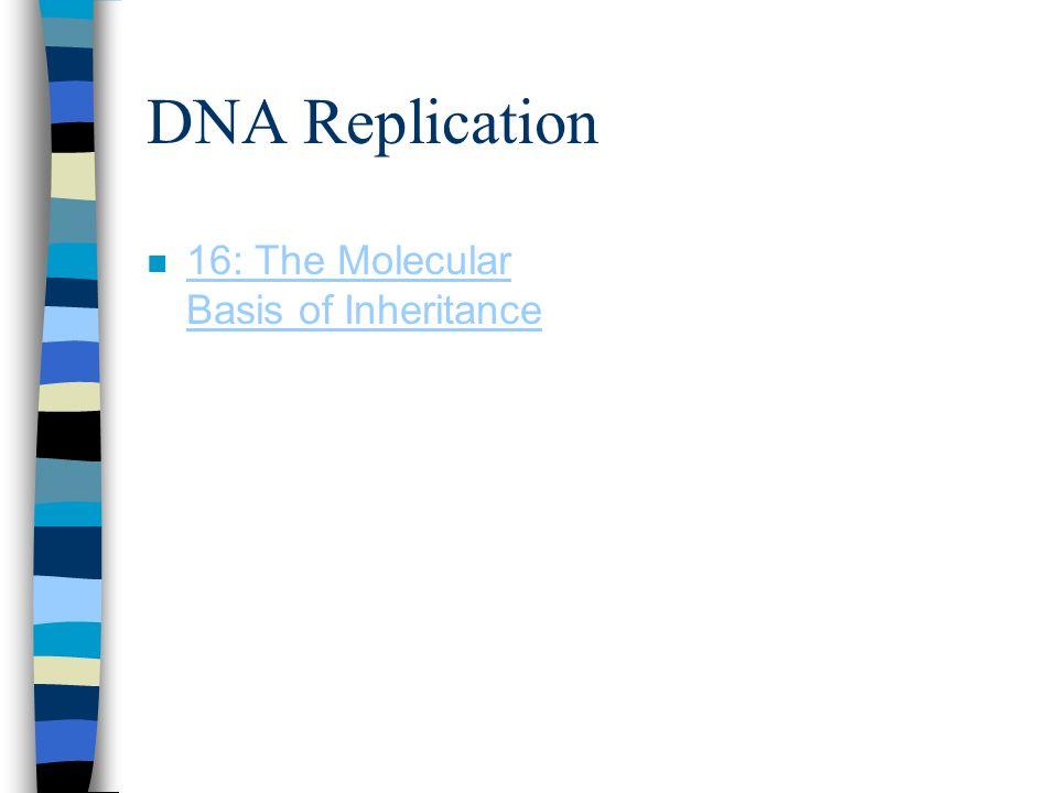 DNA Replication n 16: The Molecular Basis of Inheritance 16: The Molecular Basis of Inheritance