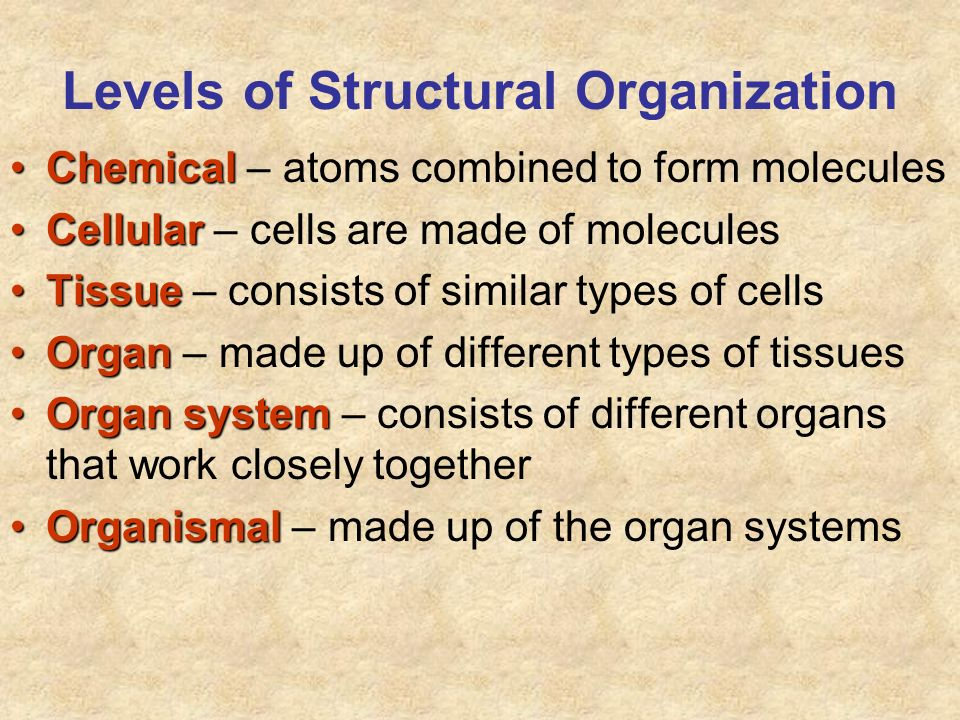 Levels of Structural Organization ChemicalChemical – atoms combined to form molecules CellularCellular – cells are made of molecules TissueTissue – co