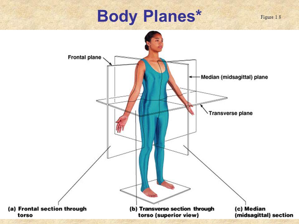 Body Planes* Figure 1.8