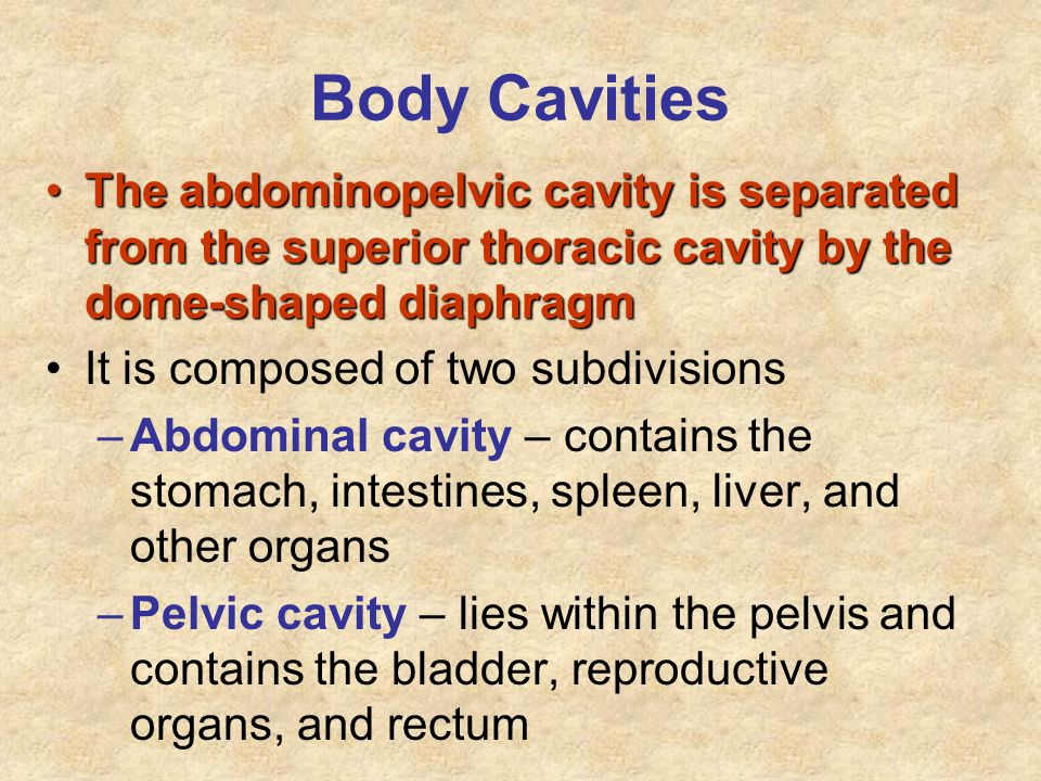 Body Cavities The abdominopelvic cavity is separated from the superior thoracic cavity by the dome-shaped diaphragmThe abdominopelvic cavity is separa