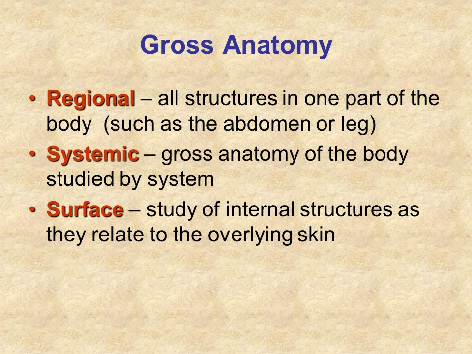 Gross Anatomy RegionalRegional – all structures in one part of the body (such as the abdomen or leg) SystemicSystemic – gross anatomy of the body stud