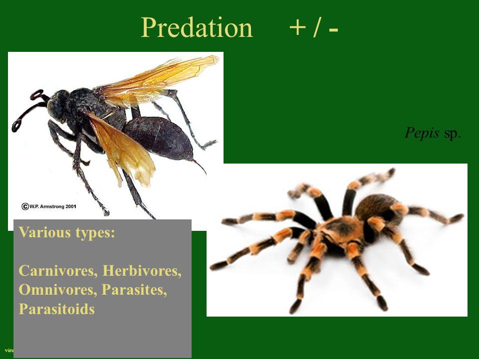 Predation + / - virus Various types: Carnivores, Herbivores, Omnivores, Parasites, Parasitoids Pepis sp.