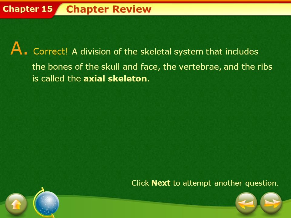 Chapter 15 Chapter Review A. Correct! A division of the skeletal system that includes the bones of the skull and face, the vertebrae, and the ribs is