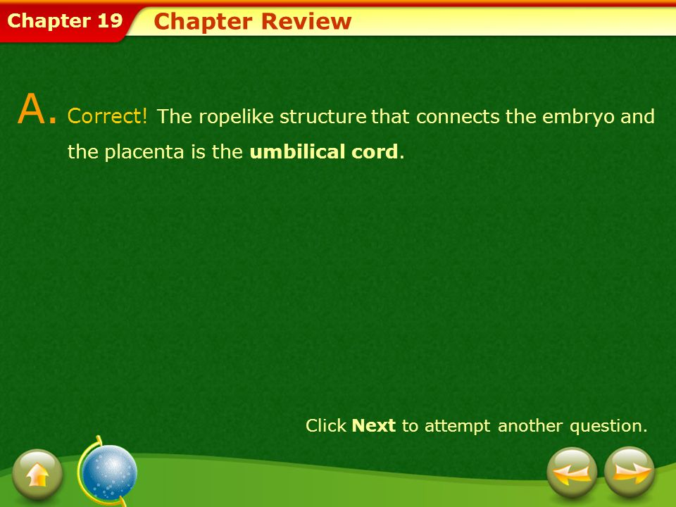 Chapter 19 Chapter Review A. Correct! The ropelike structure that connects the embryo and the placenta is the umbilical cord. Click Next to attempt an