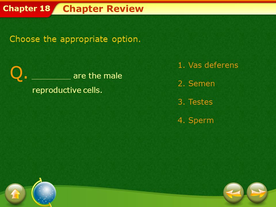 Chapter 18 Chapter Review A.Sperm are the male reproductive cells.