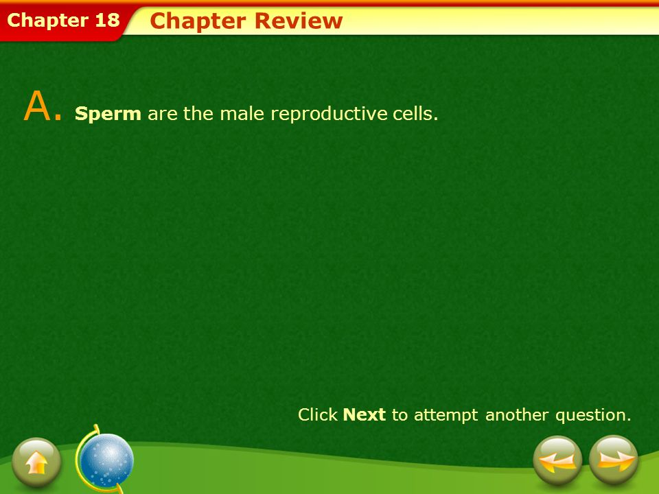 Chapter 18 Chapter Review A. Sperm are the male reproductive cells. Click Next to attempt another question.