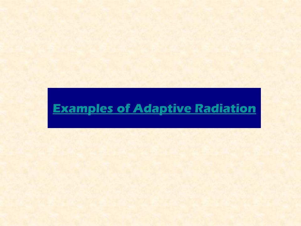 Examples of Adaptive Radiation