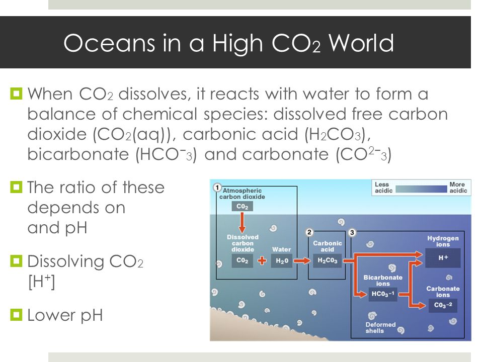 Oceans in a High CO 2 World When CO 2 dissolves, it reacts with water to form a balance of chemical species: dissolved free carbon dioxide (CO 2 (aq))