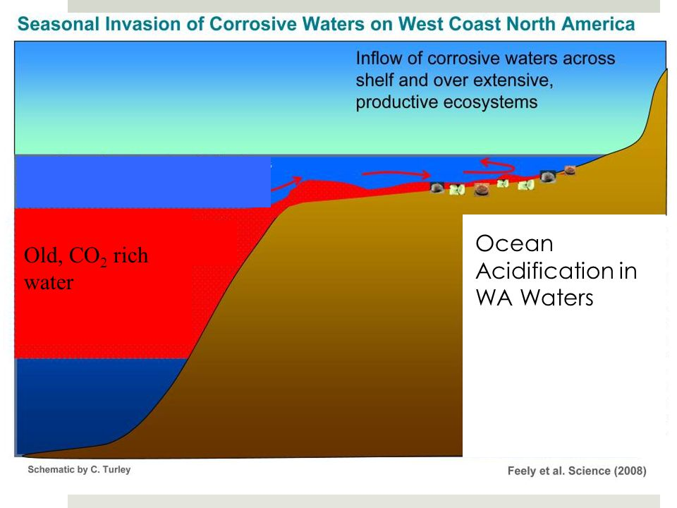 120m Aragonite Saturation State in West Coast Waters May-June 2007 Old, CO 2 rich water Ocean Acidification in WA Waters