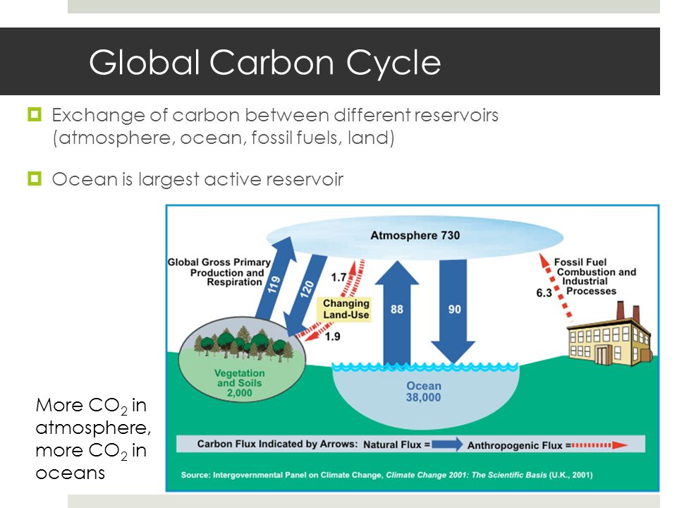 Global Carbon Cycle Exchange of carbon between different reservoirs (atmosphere, ocean, fossil fuels, land) Ocean is largest active reservoir More CO