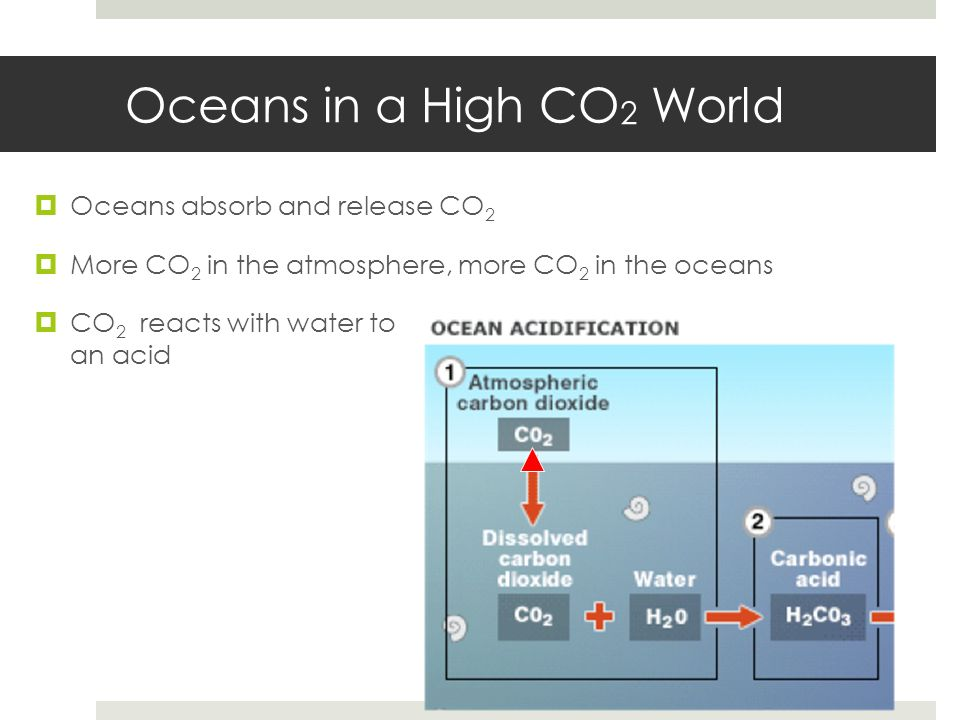 Oceans in a High CO 2 World Oceans absorb and release CO 2 More CO 2 in the atmosphere, more CO 2 in the oceans CO 2 reacts with water to form an acid