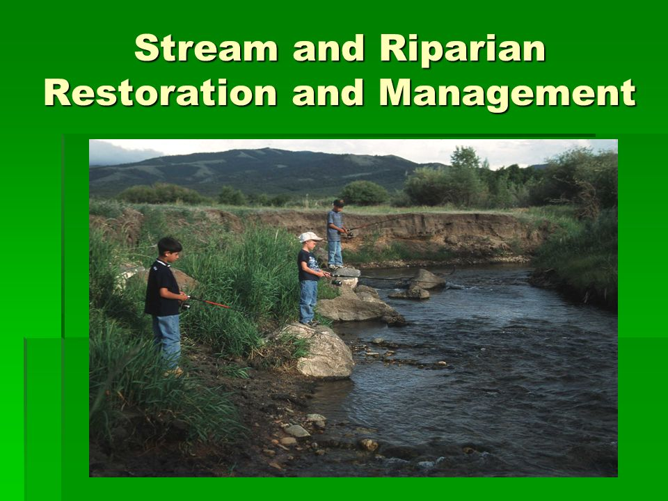 Stream and Riparian Restoration and Management