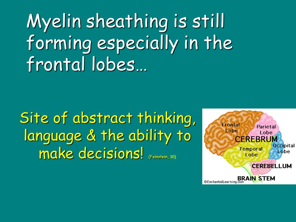 Myelin sheathing is still forming especially in the frontal lobes… Site of abstract thinking, language & the ability to make decisions.