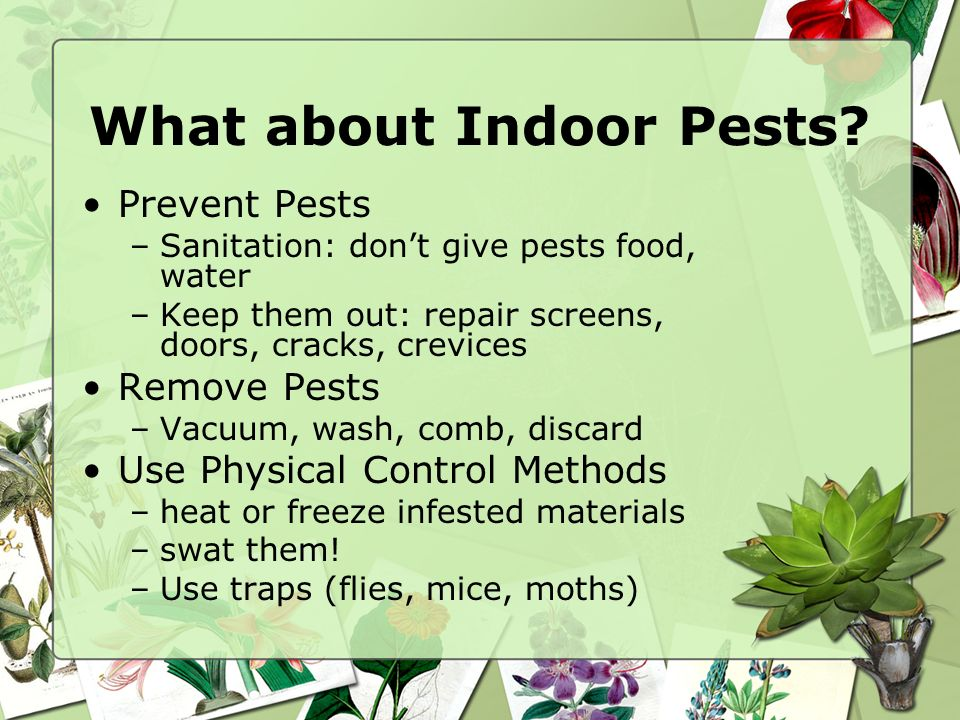 What about Indoor Pests? Prevent Pests –Sanitation: dont give pests food, water –Keep them out: repair screens, doors, cracks, crevices Remove Pests –