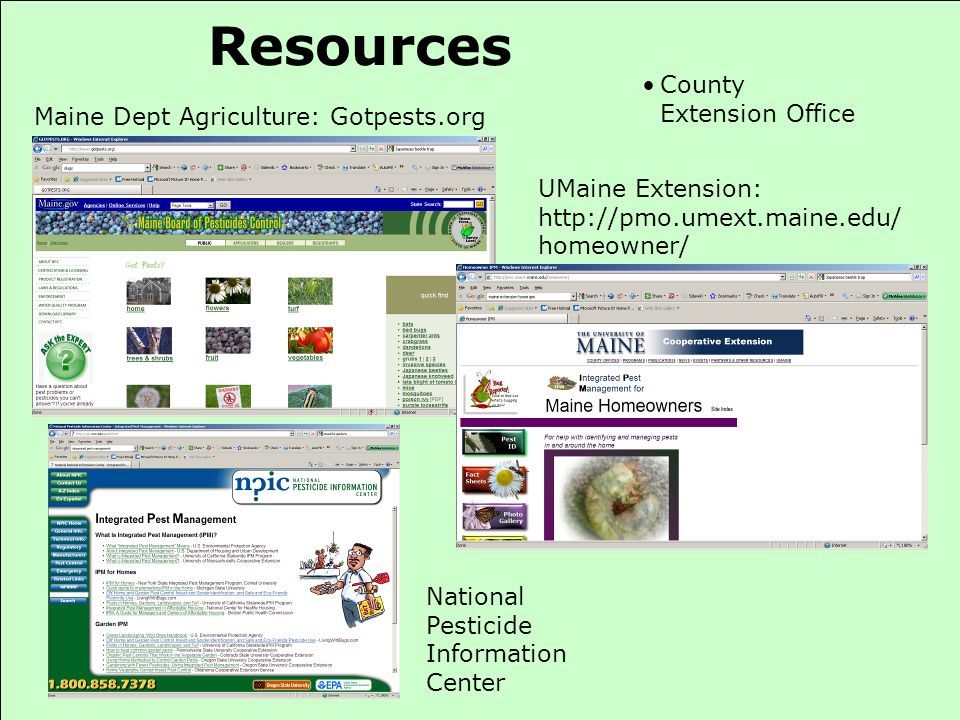 Resources Maine Dept Agriculture: Gotpests.org UMaine Extension: http://pmo.umext.maine.edu/ homeowner/ County Extension Office National Pesticide Inf