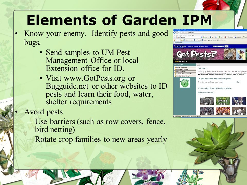Elements of Garden IPM Know your enemy. Identify pests and good bugs. Send samples to UM Pest Management Office or local Extension office for ID. Visi