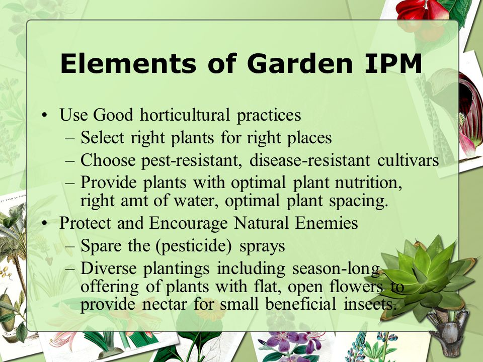 Elements of Garden IPM Use Good horticultural practices –Select right plants for right places –Choose pest-resistant, disease-resistant cultivars –Pro