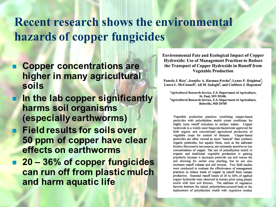 Recent research shows the environmental hazards of copper fungicides n Copper concentrations are higher in many agricultural soils n In the lab copper