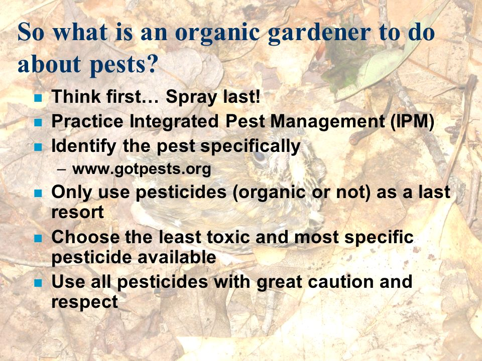 So what is an organic gardener to do about pests? n Think first… Spray last! n Practice Integrated Pest Management (IPM) n Identify the pest specifica