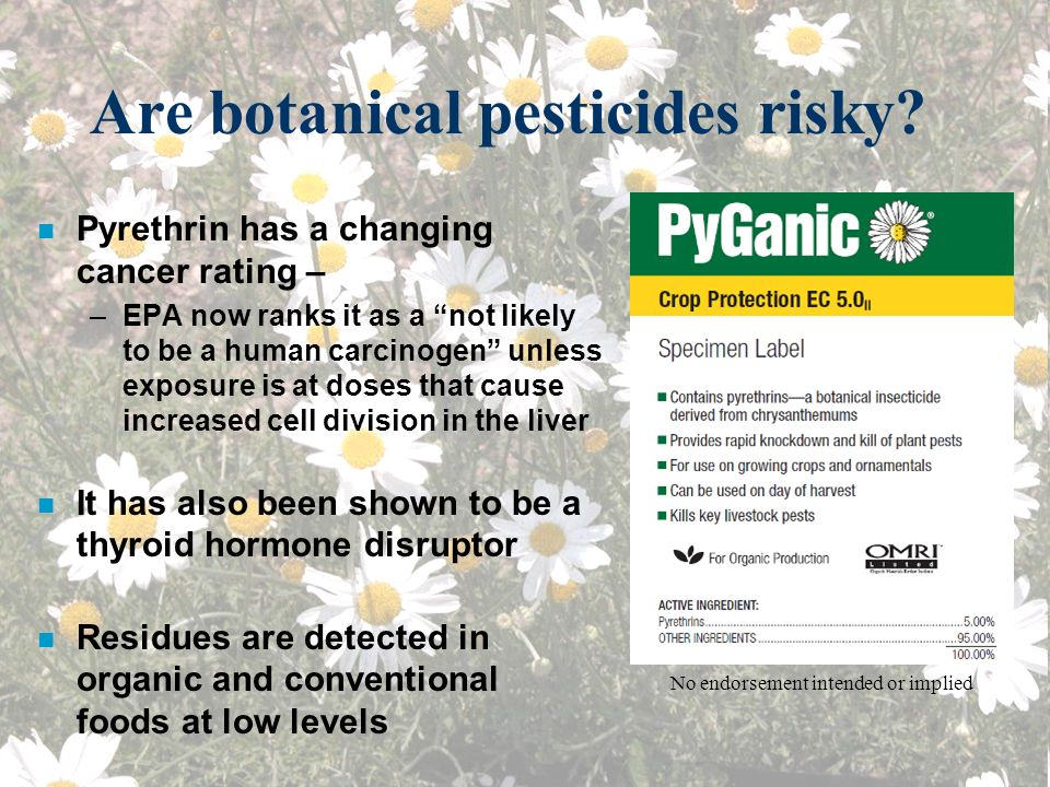 Are botanical pesticides risky? n Pyrethrin has a changing cancer rating – –EPA now ranks it as a not likely to be a human carcinogen unless exposure