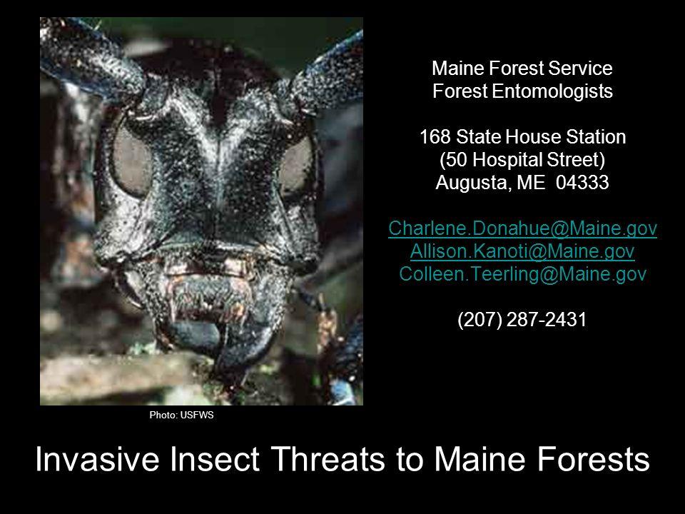 What are invasive species.