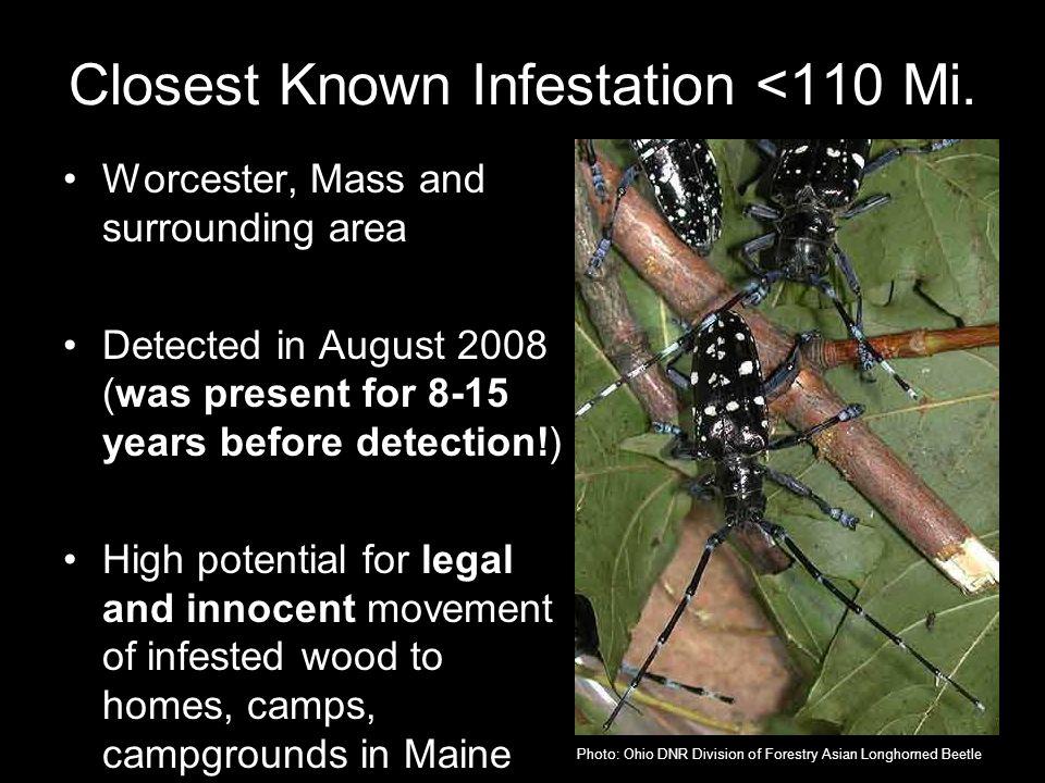 Closest Known Infestation <110 Mi.